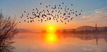 Silhouette Of Birds Flying Above The Lake At Amazing Sunset