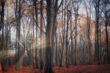 A mystical forest bathed in autumn sunlight atmosphere