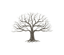 Dry Tree Vector Illustrations Isolated On White