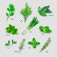 Green Herbs Set On Transparent Background. Thyme, Rosemary, Mint, Oregano, Basil, Sage, Parsley, Dill, Bay Leaves, Leek Spices Vector Illustration. Herbal Seasoning Ingredients For Cooking