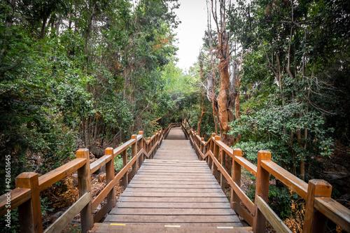 Stairs of the Arrayanes Forest promenade on Victoria Island, Villa La Angostura, Patagonia, Argentina.