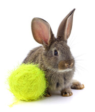 Rabbit And Ball Of Thread.