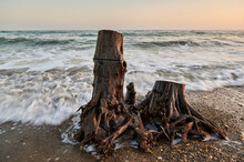 Tree Stump Close-up By The Sea