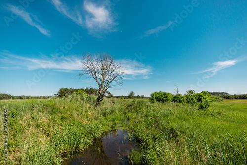 Fototapeta Rogaliński Park Krajobrazowy obraz