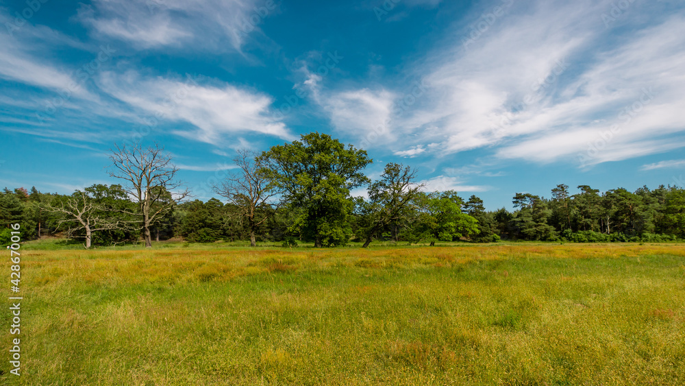 Obraz Rogaliński Park Krajobrazowy fototapeta, plakat