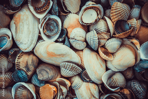 Fotografie, Obraz variety of sea shells from beach