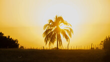 Sunrise And Sunset In The Backlit Countryside, With The Sun Behind A Coconut Palm Tree And The Orange Sky
