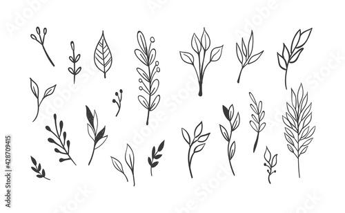Canvas Print Hand drawn floral elements
