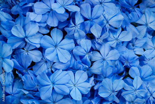 Purple flowers for background, Top view, Abstract color of flowers. - fototapety na wymiar