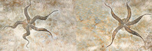Horizontal Banner With Two Petrified Fossil Starfish In Stone