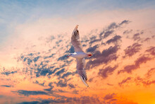 One Big Flying Seagull On Beautiful Sunset Sky Cloudy Background