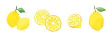 レモンの水彩イラスト