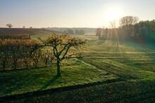 Lever De Soleil Dans La Brume En Alsace