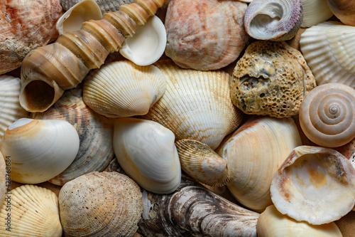 Seashells of various shapes and types. Background Fototapeta