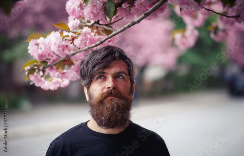 Canvas Print Charismatic bearded adult man with long mustache and gray hair near cherry bloss