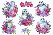 Set Of Owl And Clematis Flowers On An Isolated White Background. Watercolor Illustration,