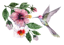 Composition Of Flying Bird Hummingbird With Tropical Flowers And Hibiscus Buds On Branches With Green Leaves. Watercolor On A White Background For Cards, Backgrounds, Textiles, Prints, Wallpapers.