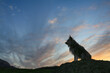 Gray dog silhouette against of a beautiful evening sky