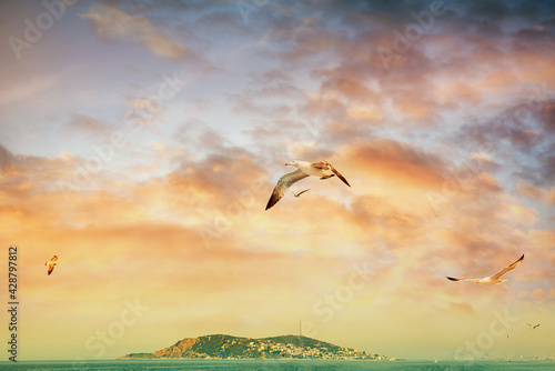 Fotografía Seagulls in the sky and one of the Prince's Islands near Istanbul at sunset