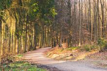 Le Coucher De Soleil Dans La Forêt