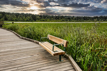 Recreational Place With New Wooden Bench In The Park On Burnaby Lake