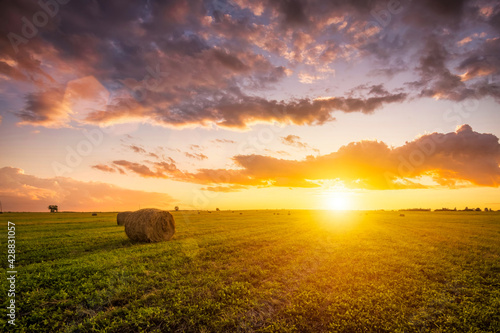 Fototapeta Sunset in a field with haystacks on a summer or early autumn evening with a cloudy sky in the background