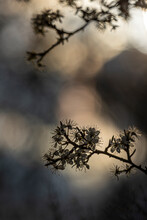 Zarte Blumen Im Frühling, Bokeh Shot