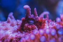 Octopus In Aquarium, Octopus Eye Closeup