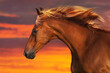 Red horse with long mane close up portrait against sunset sky
