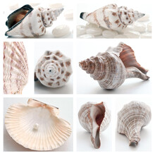 Collage Of Summer Seashells. Collection Of Seashells. Pearl On The Seashell. The Exotic Sea Shell