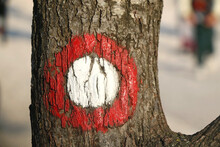 Hiking Trail Symbol Painted On The Tree Bark. Selective Focus.