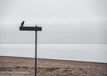 Crow Sits On A Signpost On A Deserted Secluded Beach. Depressive Atmosphere Of Abandonment