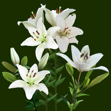 Bunch Of Four White Lily Flowers On Green Background
