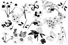 Hand Drawn Set Of Butterflies, Dragonfly And Wildflowers On White Background. Set Of Monochrome Flying And Sitting Insects Near The Flowers. Black And White Doodle Floral Elements. Meadow Flowers