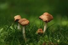 Junge Pilze Im Grass