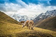 Trek Al Ausangate, Cusco - Peru
