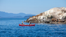 Two Men Paddle In A Red Canoe And Watch A Herd Of Giant California Sea Lions Off The Sunshine Coast Of British-Columbia Sunning Themselves On A Rock Outcrop
