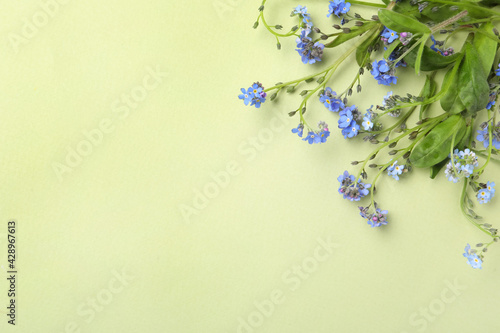 Beautiful blue forget-me-not flowers on light green background, flat lay. Space for text