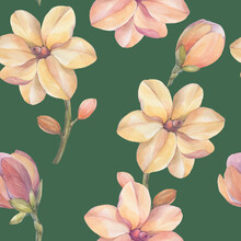 Magnolia Seamless Botanical Pattern. Watercolor Botanical Ornament. Pink Flowers On A Green Background.
