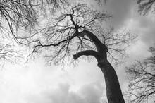 Monochromes Foto Mit Nackten Bäumen