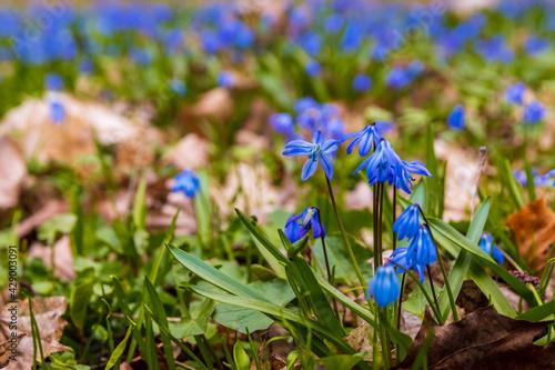Obraz Wiosna na łące  - fototapety do salonu