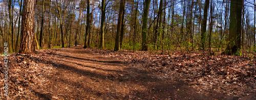 droga przez wionenny las - fototapety na wymiar