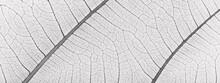 Close Up White Leaf Texture
