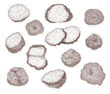 Truffle Mushroom Hand Drawn Illustrations Set. Whole And Sliced Delicious Luxury Delicatessen Engraved Vector Collection