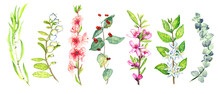 Spring  Isolated On Whitebranches Collection With Leaves, Flowers And Berries Hand Painted Watercolor Illustration With Handwritten Inscriptions