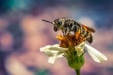 Closeup Shot Of A Bee Collecting Pollen From A Flower In A Garden