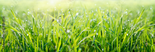 Canvas Fresh green background with dew drops on green grass banner size