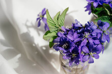 Little Hepatica Flowers On White Silk Material Background. Violet Hepatica Nobilis, Common Hepatica Or Anemone Hepatica. Early Spring Purple Flowers. Close Up.