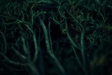 Roots Green Backgrounda