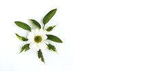 White Daisies On A White Background. Laconic Floral Arrangement. Background For A Greeting Card.